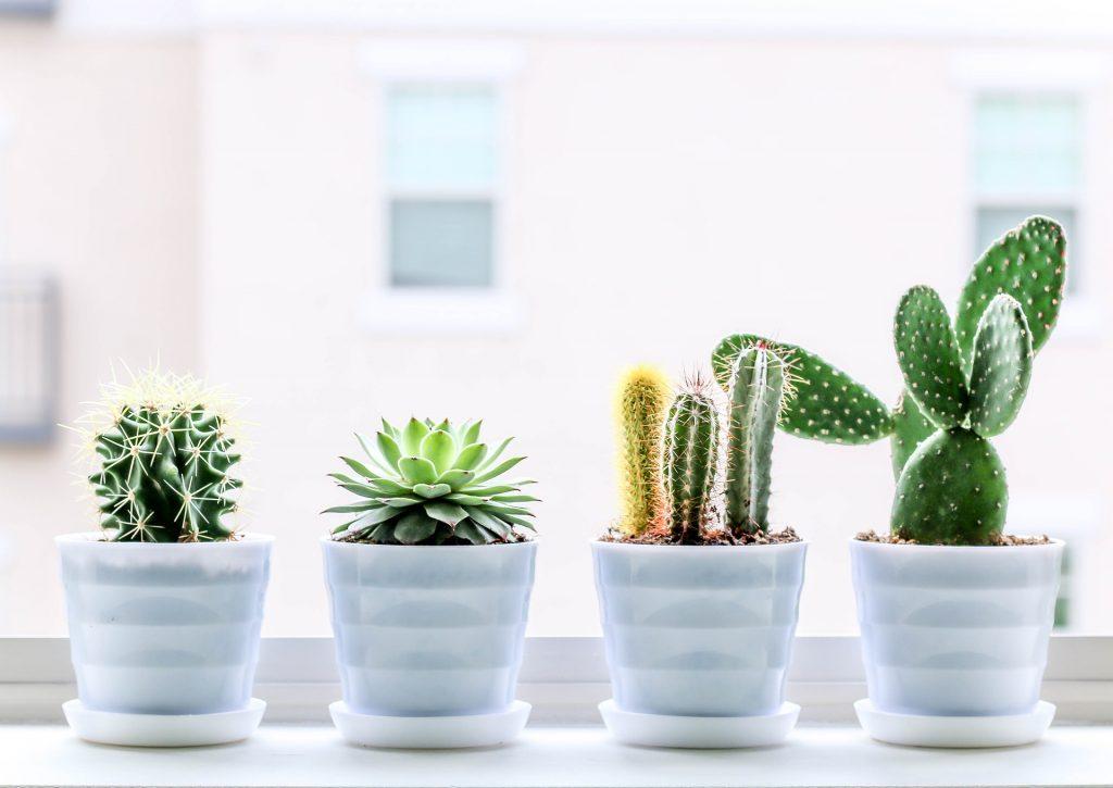 Растения в спалнята? 8 подходящи растения за здрав сън и чист въздух
